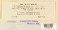 Cronartium flaccidum image