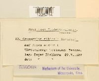 Cronartium ribicola image
