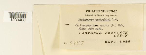 Phakopsora pachyrhizi image