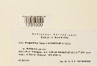 Image of Phragmidium bayatii