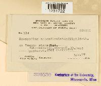 Prospodium appendiculatum image