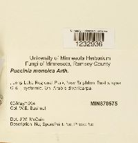 Puccinia monoica image