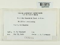 Puccinia porri image