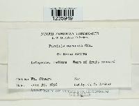 Puccinia coronata image