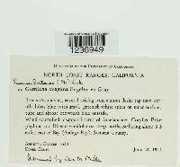 Passalora gentianae image