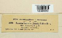 Puccinia lapsanae image