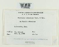 Puccinia lateripes image