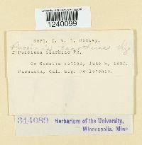 Puccinia oenotherae image