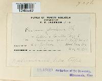 Puccinia plumbaria image