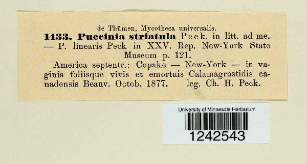 Puccinia striata image