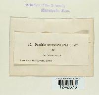 Puccinia punctiformis image