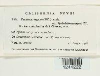 Puccinia vagans image