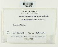 Puccinia malvacearum image