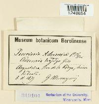 Image of Puccinia adesmiae