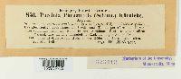 Puccinia phragmitis image
