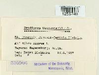 Puccinia ribesii-caricis image