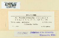Puccinia soldanellae image
