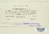 Puccinia purpurea image