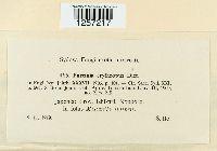 Puccinia erythropus image