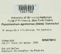 Pucciniastrum agrimoniae image