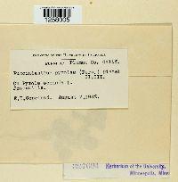 Pucciniastrum pyrolae image