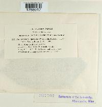 Pucciniastrum sparsum image
