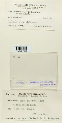 Ypsilospora tucumanensis image