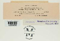 Pucciniastrum goodyerae image