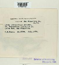 Uredo paronychiae image
