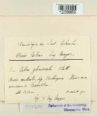 Image of Uredo caleae