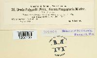 Hyalopsora aspidiotus image