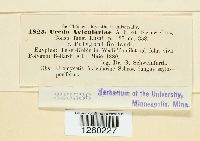 Uredo aviculariae image