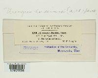 Uromyces hordeinus image