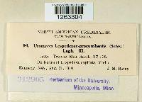 Uromyces lespedezae-procumbentis image