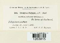 Uromyces polygoni-avicularis image