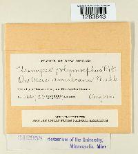 Uromyces polymorphus image