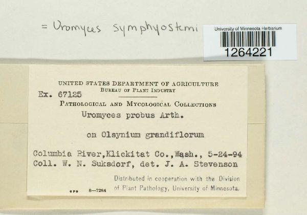 Uromyces symphiostemi image