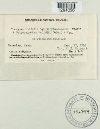 Uromyces trifolii-repentis var. trifolii-repentis image
