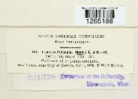 Uromyces polymniae image