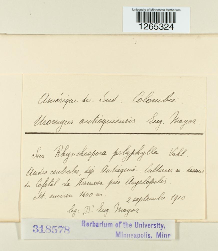 Uromyces antioquiensis image