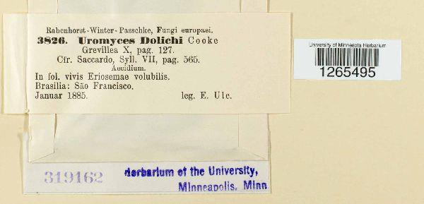 Uromyces dolicholi image