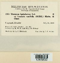 Uromyces setariae-italicae image