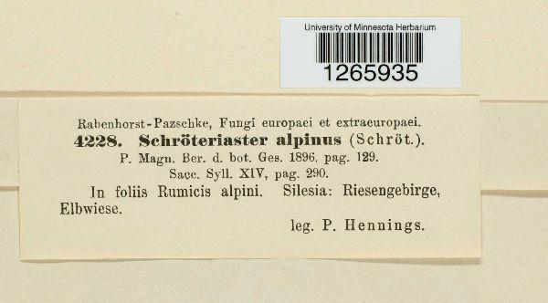 Uromyces alpinus image