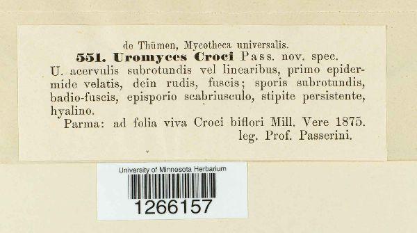 Uromyces croci image