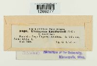 Uromyces erythronii image