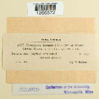 Uromyces geranii image