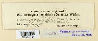 Uromyces lineolatus image