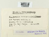 Uromyces phyteumatum image
