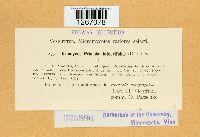Puccinia primulae image