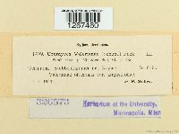 Uromyces valerianae image